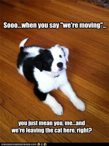 "Sooo...when you say ""we're moving""... you just mean you, me...and we're leaving the cat here, right?"