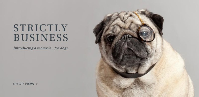 monocle,dogs,Warby parker,glasses,april fools,warby barker