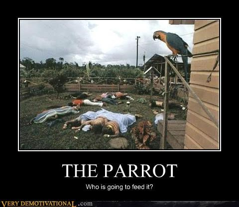 animal,bird,dead bodies,nature,parrot,sleeping