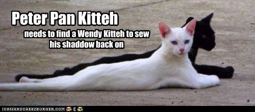 black,book,caption,captioned,cat,Cats,Movie,need,peter pan,reattach,reattaching,sewing,shadow,wendy,white