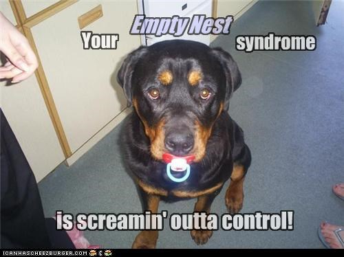 binky,do not want,empty,empty nest,nest,out of control,pacifier,rottweiler