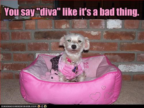 bad,bed,confused,costume,diva,dressed up,fabulous,Hall of Fame,pink,prissy,say,tone,voice,whatbreed