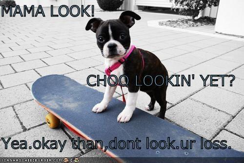 Cheezburger Image 4416744192