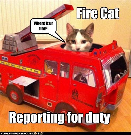 Where iz ur fire? Fire Cat Reporting for duty