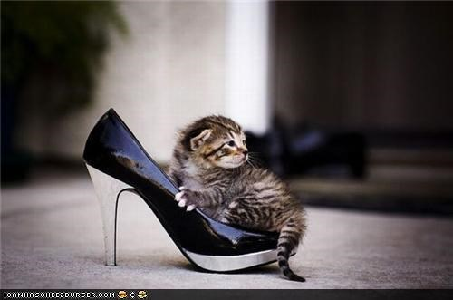 cyoot kitteh of teh day,fashion,high heels,kitten,shoes