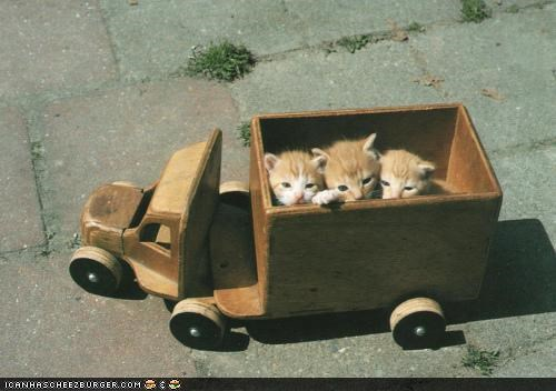 cyoot kitteh of teh day,dump truck,orange,toy,truck,wood,wooden toy