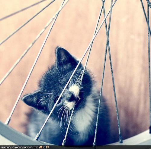 bicycle,bike,bite,cyoot kitteh of teh day,floss,spokes,teeth