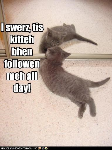 I swerz, tis kitteh bhen followen meh all day!
