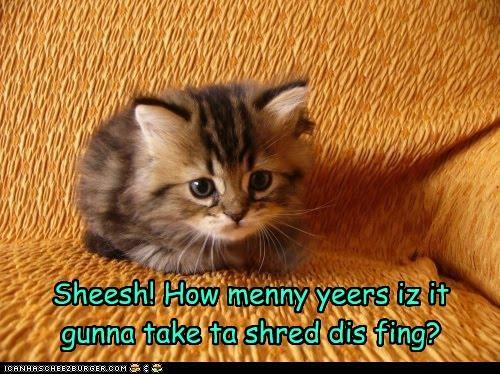 Sheesh! How menny yeers iz it gunna take ta shred dis fing?