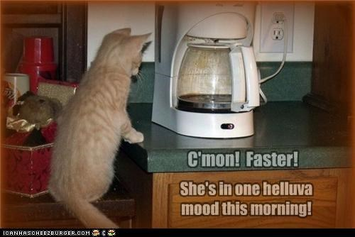 afraid,bad,bad mood,brewing,caption,captioned,cat,coffee,come on,faster,Hall of Fame,human,kitten,machine,mood,morning,waiting