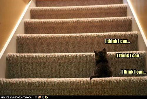afraid,can,caption,captioned,cat,climbing,confidence,Hall of Fame,I,i think i can,kitten,stairs,think,trying
