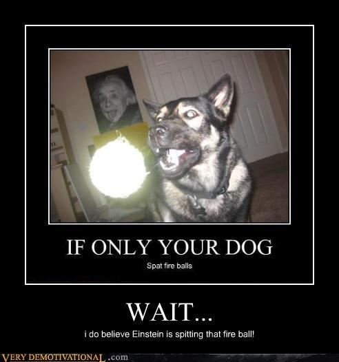 dogs einstein fireball - 4418723840