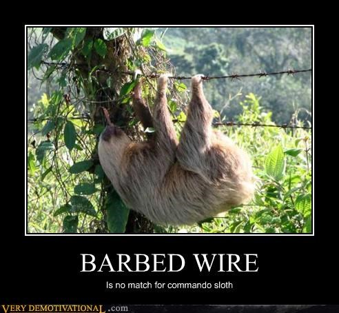 animal,awesome,barbed wire,commando,nature,sloth