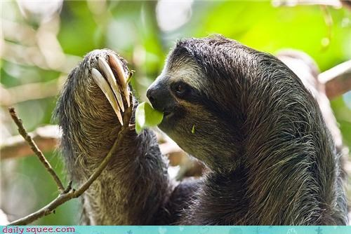 dinner eating etiquette jealous leaf nomming noms sloth - 4419187968