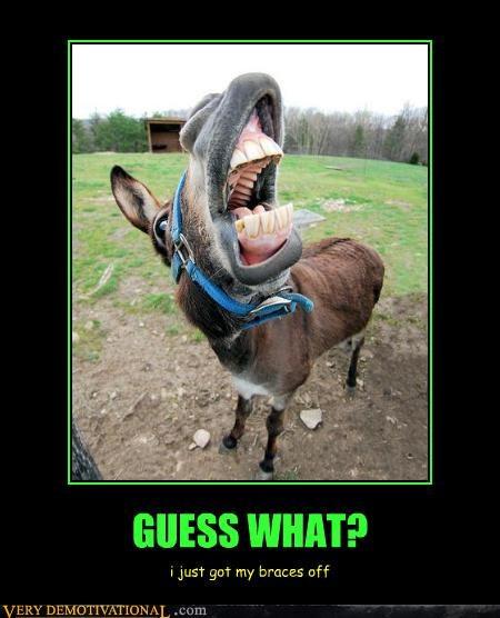 braces donkey teeth - 4419422976
