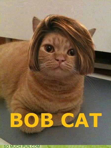 bob,bobcat,cat,hair,haircut,juxtaposition,literalism,style