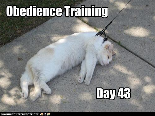 Obedience Training Day 43
