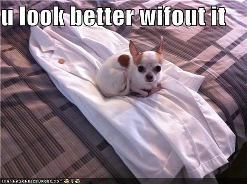 better,chihuahua,judging,judgment,look,opinion,robe,without
