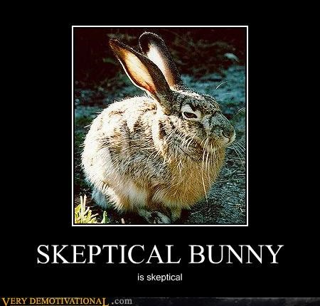animal bunny cute nature skeptical