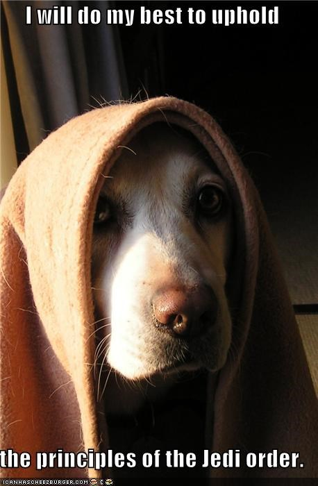best doing Hall of Fame honor Jedi labrador oath principles robe star wars trying uphold upholding vow - 4420065536