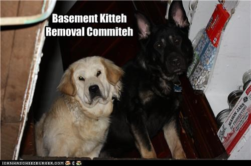 basement cat,committee,german shepherd,labrador,removal