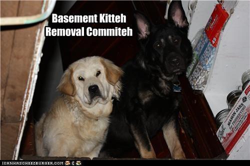 basement cat committee german shepherd labrador - 4420405248