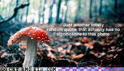 badger badger badger emolulz fungi picture quote words - 4420831232