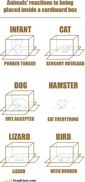 animals,Babies,box,cat,dead,fate,infographic