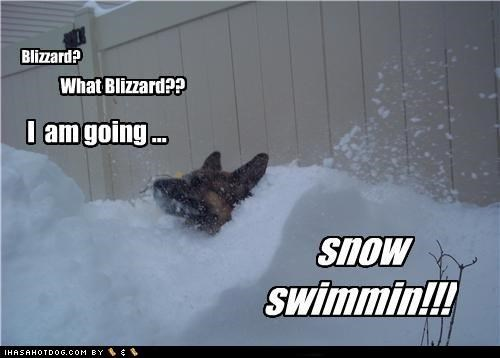 afraid,blizzard,deep,denial,german shepherd,Hall of Fame,not,snow,snowstorm,swimming,unafraid