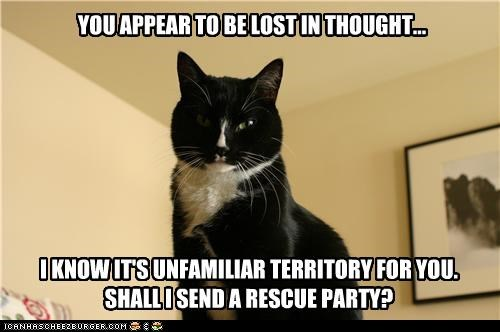 appear asking caption captioned cat Hall of Fame lost mean Party question rescue sarcasm territory thought unfamiliar you - 4421718016