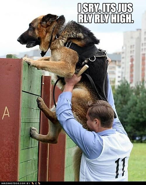 apologizing,assistance,climbing,FAIL,german shepherd,Hall of Fame,high,really,sorry,wall