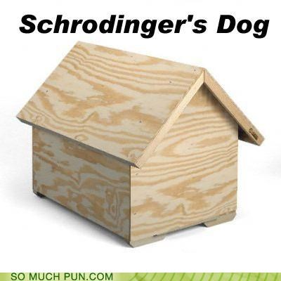 box cat dogs dog house doghouse physics schrodinger superposition theoretical theoretical physics theory