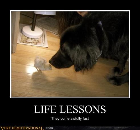 life lessons bird food dogs