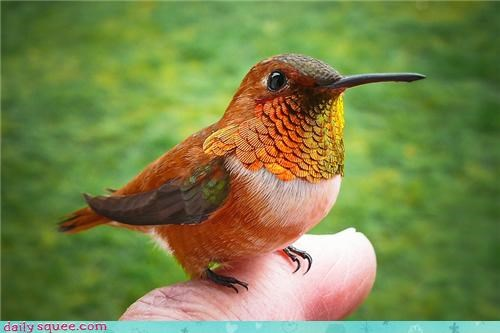 finger,gold,grass,hand,hummingbird,orange,spring,sunshine