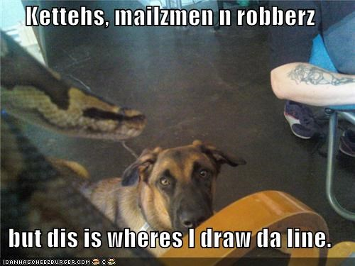 cat Cats do not want drawing german shepherd line mailman mailmen snake upset