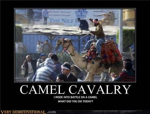 awesome,Battle,camel