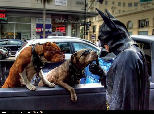 awesome batman costume friends friendship Hall of Fame hero petting pit bull pit bulls pitbull pitbulls soft spot sunglasses superhero - 4423056384