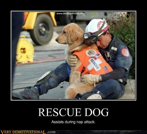 animals,cute,dogs,nap,rescue