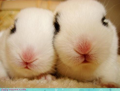 bunnies bunny celebrating chinese new year imagining party animal rabbit rabbits year of the rabbit - 4423201792