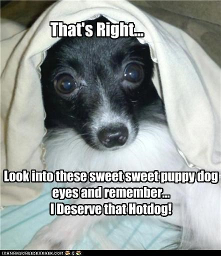 That's Right... Look into these sweet sweet puppy dog eyes and remember... I Deserve that Hotdog!