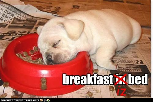 bed breakfast breakfast in bed bulldog Hall of Fame in is puppy same sleeping - 4423788544