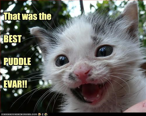 best,best ever,caption,captioned,cat,ever,excited,happy,kitten,puddle,wet