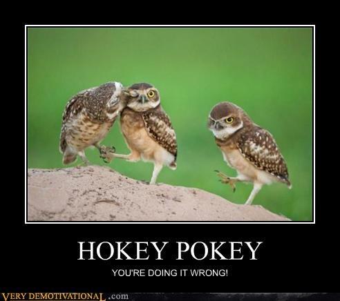 hokey pokey owls wrong - 4425244160