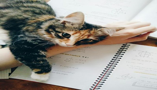 a list of pets not letting their owners finish their homework