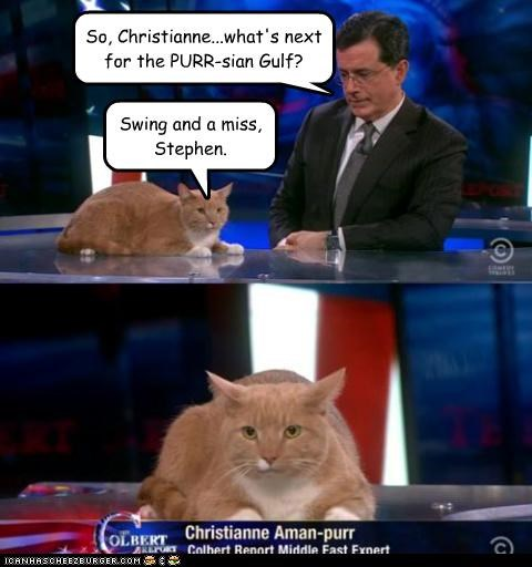 Cats,christiane amanpour,lolcats,puns,purr,stephen colbert,the colbert report,TV