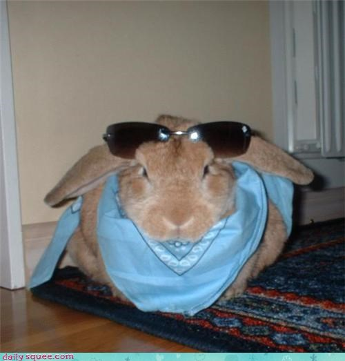 bad bandana bone bun bunny off-rhyme pun rabbit reader squees similar sounding sunglasses - 4426046208