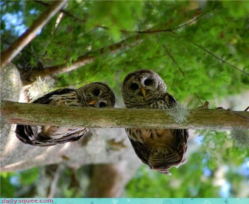 branch condescending eyes literalism Owl owls perching Staring - 4426332928