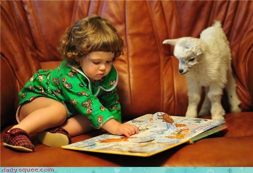 baby,child,children,comparison,competition,goat,human,kids,reading,toddler