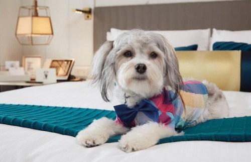 adoption hotel pets san francisco - 4426501