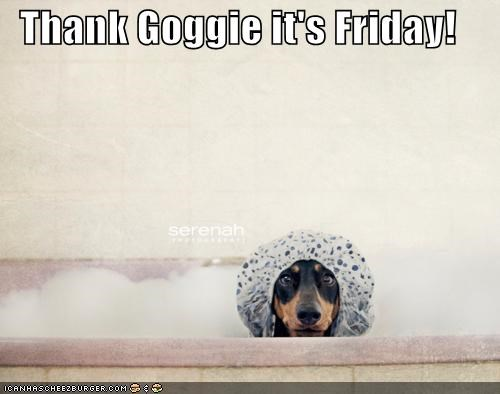 bath bathtub bubbles cap cute dachshund do not want hat shower cap thank-goggie-its-friday tub